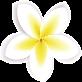 elements-summer-sale-banner-NK5W2VA_flower